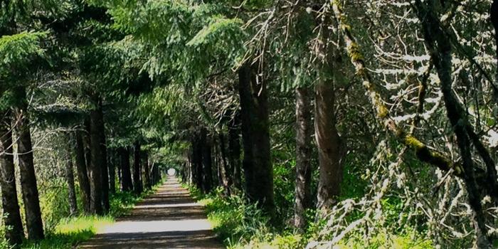 Walking-Trail-Tree-Canopy