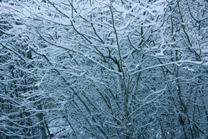 branches in snow 3
