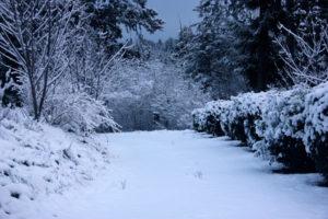 driveway-snow-2