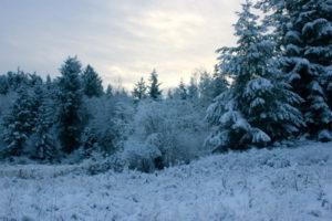 field-snow