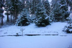 rock-hill-snow